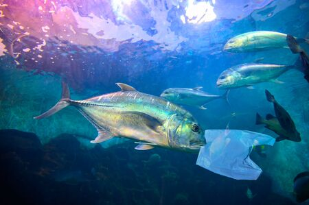 Fish are eating plastic bags under the blue sea. Environmental conservation concepts and not throwing garbage into the sea.
