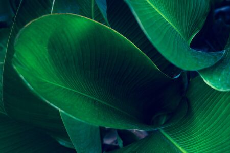 tropical leaves colorful flower on dark tropical foliage nature background dark green foliage nature Banco de Imagens
