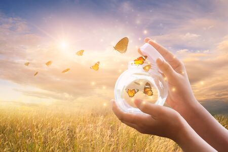 The girl frees the butterfly from the jar, golden blue moment Concept of freedom Banco de Imagens
