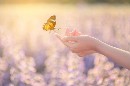 Das Mädchen befreit den Schmetterling aus dem Glas, goldener blauer Moment Konzept der Freiheit