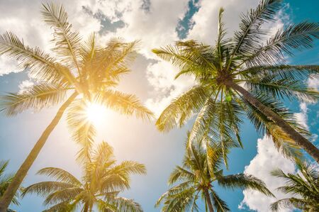 Coconut trees and sun with clouds over the sky. Summer concept.