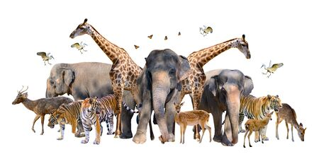 A group of wildlife such as deer, elephants, giraffes and other wild animals grouping together in a white background.Isolate Banco de Imagens