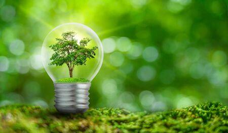 Die Glühbirne befindet sich im Inneren mit Blätterwald und die Bäume stehen im Licht. Konzepte des Umweltschutzes und der globalen Erwärmung Pflanzen, die in der Glühbirne über trocken wachsen