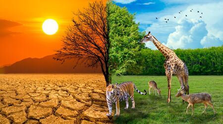 The screen separates the drought and the complete forest where the wildlife is living. Global warming concept 版權商用圖片 - 141433448