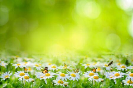 flower Leaf background bokeh blur green background 版權商用圖片