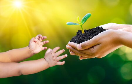 Adults Baby Hand tree environment Earth Day In the hands of trees growing seedlings. Bokeh green Background Female hand holding tree on nature field grass Forest conservation concept