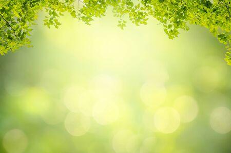 Fond de feuille bokeh flou fond vert Banque d'images