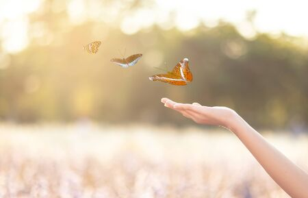 The girl frees the butterfly from the jar, golden blue moment Concept of freedom Stockfoto
