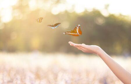 La ragazza libera la farfalla dal barattolo, momento blu dorato Concetto di libertà Archivio Fotografico