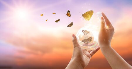 The girl frees the butterfly from the jar, golden blue moment Concept of freedom 版權商用圖片 - 146533855