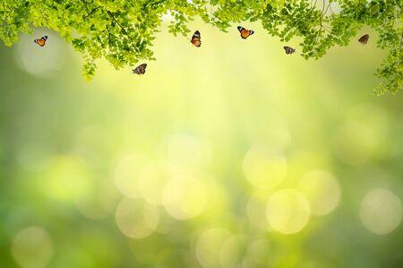 Leaf background bokeh blur green background 版權商用圖片