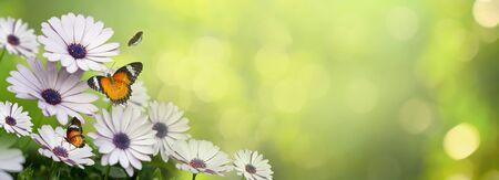 flower Leaf background bokeh blur green background 版權商用圖片 - 146074795