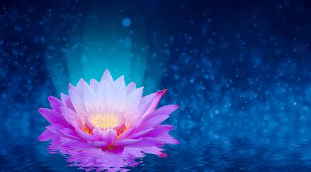 lotus Pink light purple floating light sparkle purple background 版權商用圖片 - 146820826