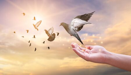 La femme libère le pigeon dans le ciel. Banque d'images