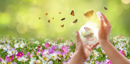The girl frees the butterfly from the jar, golden blue moment Concept of freedom 版權商用圖片 - 147945956
