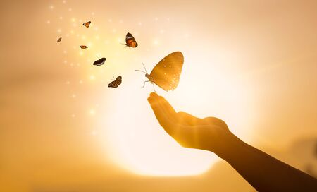 The girl frees the butterfly from moment Concept of freedom Standard-Bild