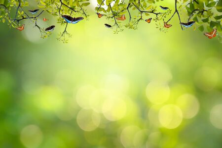 Leaf background bokeh blur green background 版權商用圖片 - 147830320