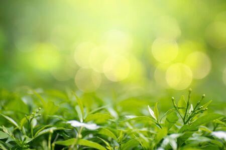 Leaf background bokeh blur green background 版權商用圖片 - 147830151