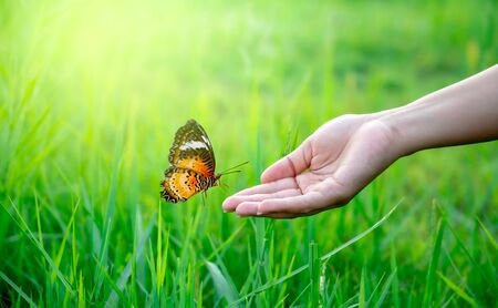 A butterfly is flying on the hand of a woman in a lush meadow. 版權商用圖片 - 147937188