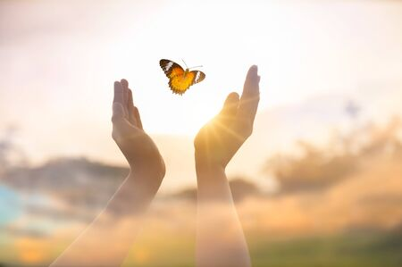 The girl frees the butterfly from  moment Concept of freedom 版權商用圖片 - 149679401