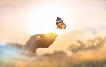 The girl frees the butterfly from  moment Concept of freedom 版權商用圖片