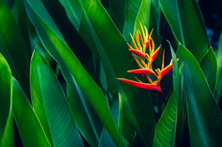 tropical leaves colorful flower on dark tropical foliage nature background dark green foliage nature 版權商用圖片 - 149310459