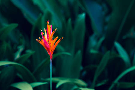 tropical leaves colorful flower on dark tropical foliage nature background dark green foliage nature 版權商用圖片