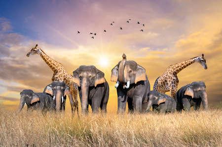 Large group of african safari animals. Фото со стока