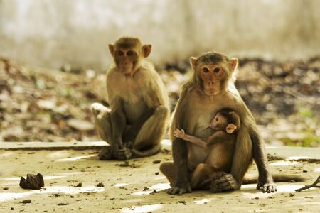 pet photography: Monkey Family Stock Photo