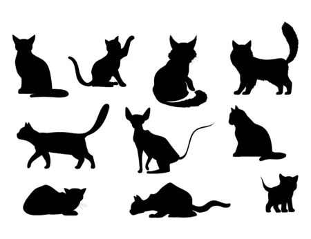 Cat icon. Vector illustration of a pet