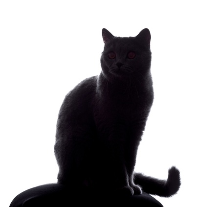 cat silhouette sitting on white background Stock Photo