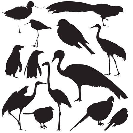 Set of wild birds silhouettes Vettoriali