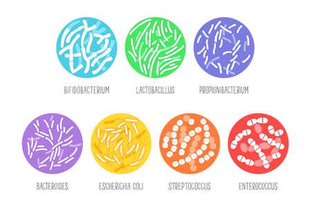 Types of probiotics on a white background. Vector illustration. Vetores