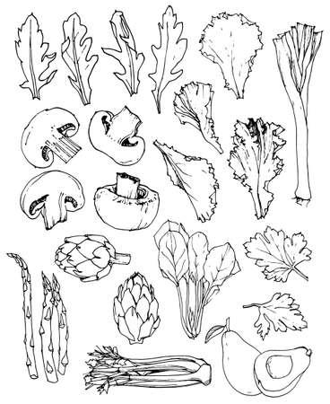 Hand-drawn greens and mushrooms set. Vector illustration. Vetores