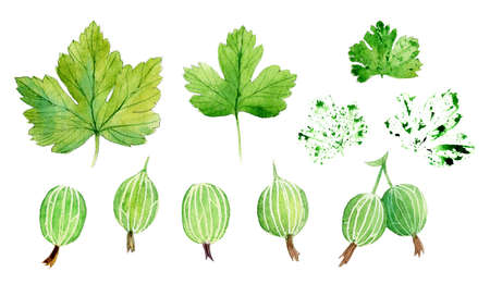 Set with gooseberry. Watercolor work.