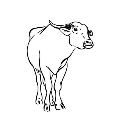 Vector sketch of yak. Hand drawn linear illustration. Vector hand drawn illustration on white background.