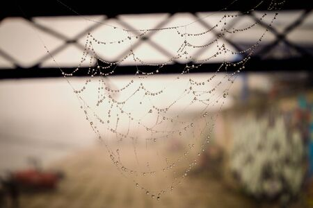 spider net: Spider net with water drops, simple composition Stock Photo