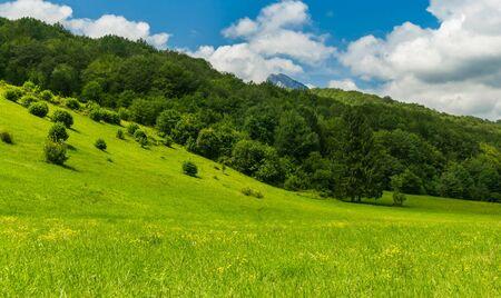 Beautiful flower field, National parc Sutjeska, Bosnia and Herzegovina with beautiful blue sky