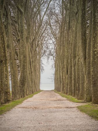 Avenue of trees, lake Leman in the background city of Lausanne Switzerland Stock Photo
