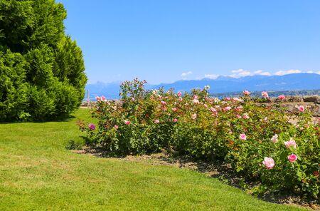 Beautiful park with many roses, Nyon Switzerland Stock Photo