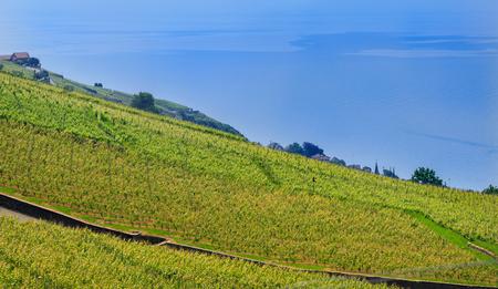 Switzerland, Lavaux village, lake Leman, vineyard and beautiful blue lake.