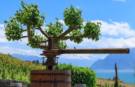 helical: Wine press on vineyard. Region Lavaux, near the city of Lausanne Switzerland
