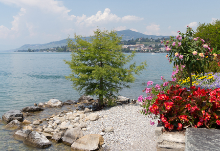 Part of promenade with the beautiful flowers, a lonely tree on the small beach and city scape on the background. City of Montreux, canton Vaud Switzerland