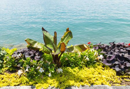 Part of garden with the beautiful flowers in the stone jardners and water scape on the background. City of Montreux, canton Vaud Switzerland