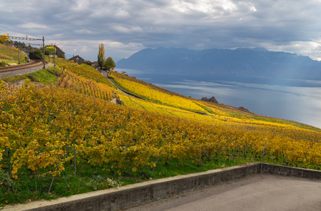 Beautiful Lavaux region with the vineyard on autumn, rail way and fantastic view on lake Leman on the background. Canton Vaud, Switzerland