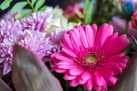 Beautiful pink-violet gerbera flower, part of bouquet. Macro photography