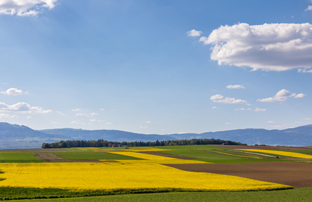 Yellow rapeseed field against the blue cloudy sky. Landscape photography Stock Photo