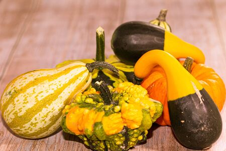 Various pumpkins on wooden texture. Studio shot