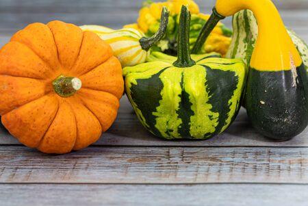 Various sort of decorated pumpkins on wooden texture. Studio shot