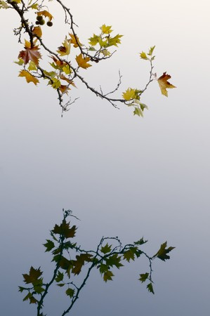 A tree branch with autumnal leaves reflected in the water photo